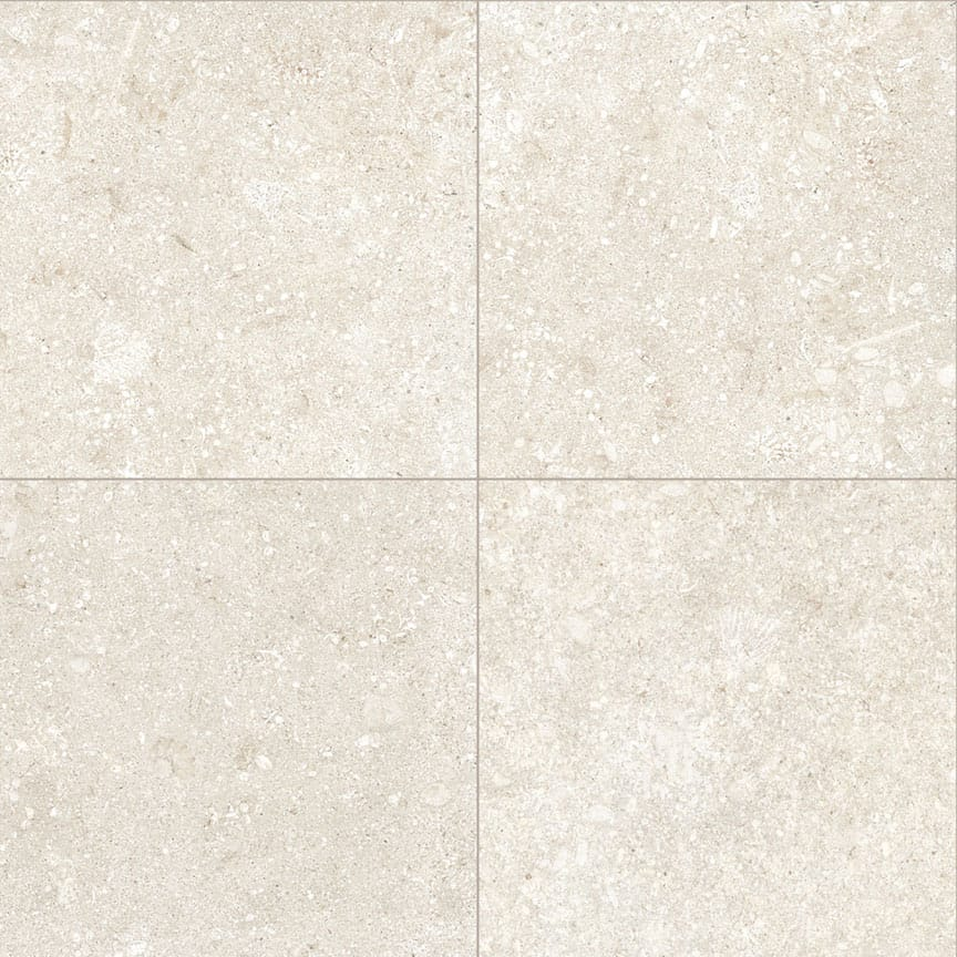 Seashell-Cool-Four-900×900