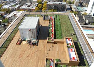 Green-Roof-IPE-Wood-Pedestal-Pavers_03