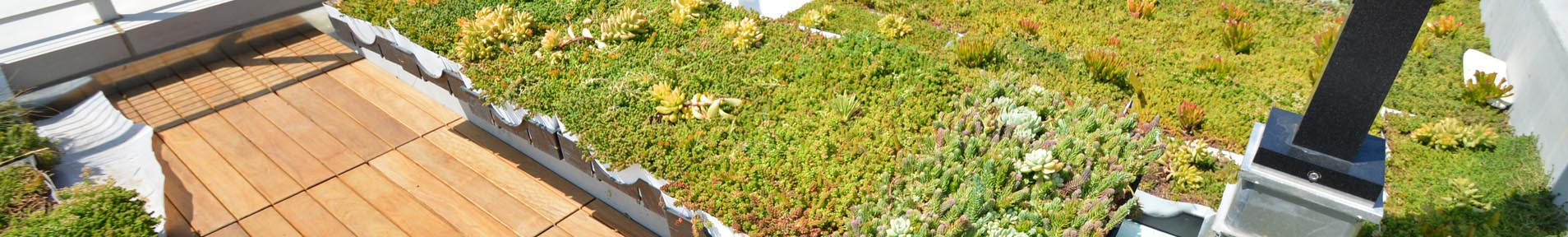 Plant-Tray-Green-Roof_Banner_02